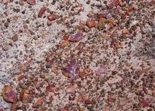 Puces pétrifiées des ordures en bois la roche en place grise de grès Photographie stock