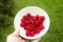 Puchar Świeżo Ukradzione Organicznie Czerwone malinki Zdjęcie Stock