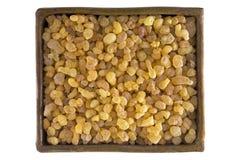 Puchar aromatyczny żółty żywicy dziąsło od Sudańskiego Frankincense tre obrazy stock