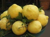 Puchar ogromne słodkie i kwaśne cytryny w południowym Włochy Zdjęcie Stock
