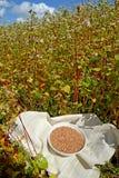 Puchar z gryczanymi kłamstwami w polu kwitnie gryka wysiewna kampania Fagopyrum esculentum Moench zdjęcia royalty free