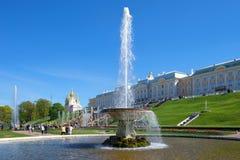 ` pucharu ` fontanna przeciw tłu Uroczysty Peterhof pałac w pogodnym Maja popołudniu Petergof Zdjęcie Stock