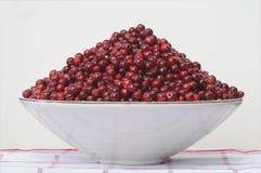 pucharu lingonberry Zdjęcie Royalty Free
