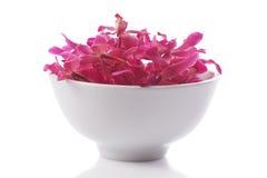 pucharu orchidei czerwień Obrazy Stock