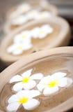 puchary target1517_0_ frangipanis wodę Zdjęcie Royalty Free
