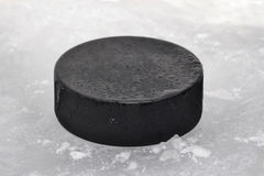 Puck Royalty Free Stock Photo