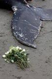 Puckelryggvalwashes ashore och matrist royaltyfria bilder