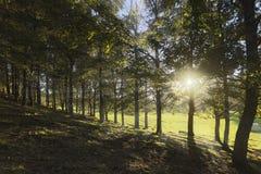 Pucon、辣椒、森林和太阳 免版税库存图片