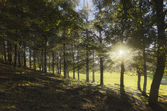 Pucon, chile, лес и солнце Стоковое Изображение RF