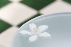 The PUD Pitchaya  flowers. On the water in bowl Stock Photo