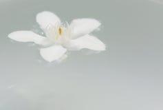 PUD Pitchaya kwiaty Obrazy Stock
