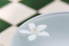 PUD Pitchaya kwiaty Zdjęcie Stock