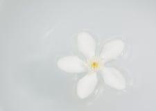 PUD Pitchaya kwiaty Zdjęcie Royalty Free