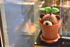 Puddingu niedźwiedzia torta roślina w garnku zdjęcia stock