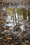 Puddle authumn Royalty Free Stock Images
