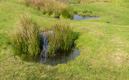 Puddle Stock Photography