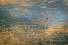 A puddle with circles on the blue surface of the water, painted with a setting sun in golden tones. Puddle with circles on the blue surface of the water Royalty Free Stock Image