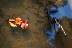 Puddle and colorful leafs,autumn Royalty Free Stock Photos