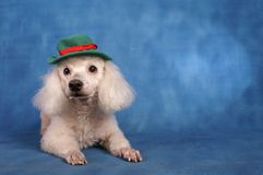 Puddle dog Christmas. Puddle dog green hat Christmas  day Royalty Free Stock Photo