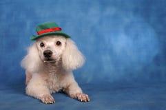Puddle dog Christmas Royalty Free Stock Photo