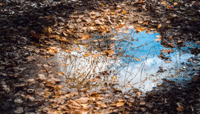 Puddle with fallen autumn leaves Royalty Free Stock Image