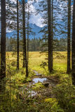 Puddle in the forest. Alpine forest at an altitude of over 2,000 meters Royalty Free Stock Photography