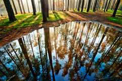 Puddle in the forest Royalty Free Stock Photo