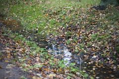 Puddle in forest. With fall yellow and orange leaves Royalty Free Stock Photography