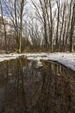 A puddle in a forest. Winter landscape with a puddle in the woods and trees royalty free stock photos