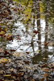 Puddle in forrest Royalty Free Stock Photography