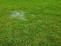 A puddle on the lawn Royalty Free Stock Image