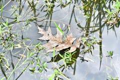 Puddle leaf Stock Photo