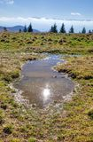 Puddle on a meadow in the mountains. Stock Photography