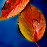 Puddle Of Leaves Stock Images