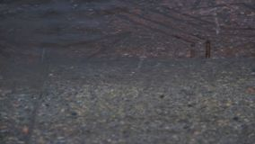 Puddle on the pavement in the rain. Drops fall into the water and diverge circles. Interference of waves. April rain. The first sp. Ring rain in the city. Water stock footage