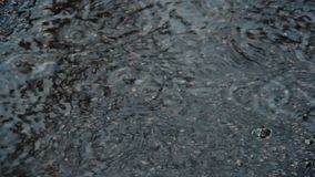 Puddle on the pavement in the rain. Drops fall into the water and diverge circles. Interference of waves. April rain. The first sp stock video footage