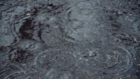 Puddle on the pavement in the rain. Drops fall into the water and diverge circles. Interference of waves. April rain. The first sp. Ring rain in the city. Water stock video