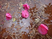 The puddle Royalty Free Stock Images