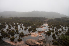 Puddle in pink rock with weird endemic flora. And pathway made of stones lost in fog stock photo