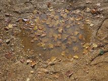 puddle of rain water and mud stock photography
