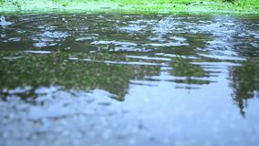Puddle on rainy day. water drops. Water puddle on rainy day with water drops falling. Cold day in the park stock video
