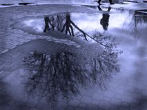 Puddle Reflection of Tree and Person Walking Cobblestone Stock Images