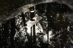 Puddle on a road with reflection of forest Royalty Free Stock Images