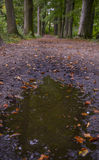 Puddle with trees Royalty Free Stock Images