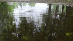 Puddle water rain drop. Closeup of puddle water and tree reflections on it and rain drops falling stock video footage