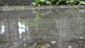 Puddle water rain drop. Puddle pool water and air bubble blow rippling stock video footage