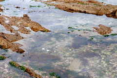 Puddle of water on the rock at low tide Royalty Free Stock Photo