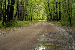 Puddles, country road, spring. Puddles on a wet country road reflect a spring forest, minnesota Royalty Free Stock Photos