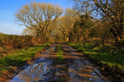Puddles down a muddy country lane Royalty Free Stock Photos