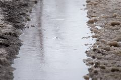 Puddles from the rain in winter. In the park in nature Royalty Free Stock Image